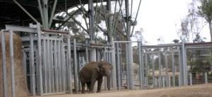 zoo 021a
